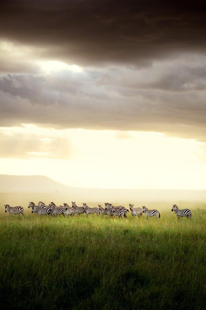 MAŁA AKADEMIA BBC EARTH: DZIKA AFRYKA (KINOwakacje 2019)
